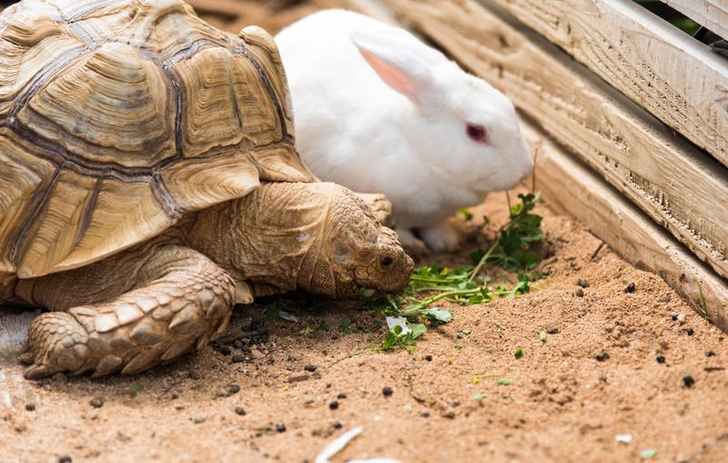 rabbit_turtle001