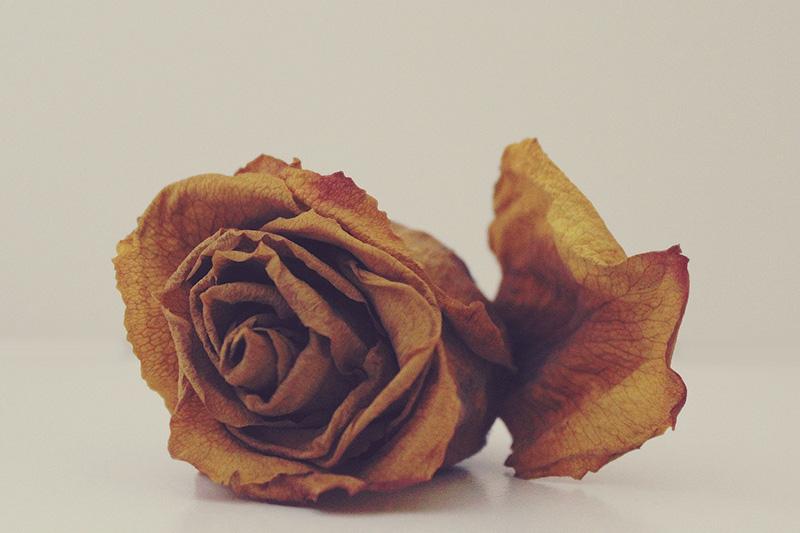 dead_flowers001