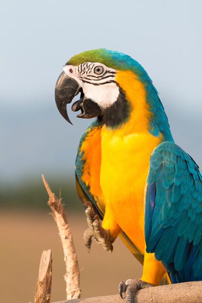 parrot002