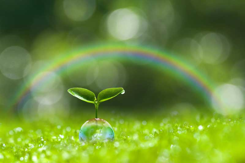 sprout_rainbow001