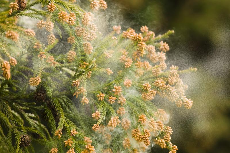 ec_pollen001